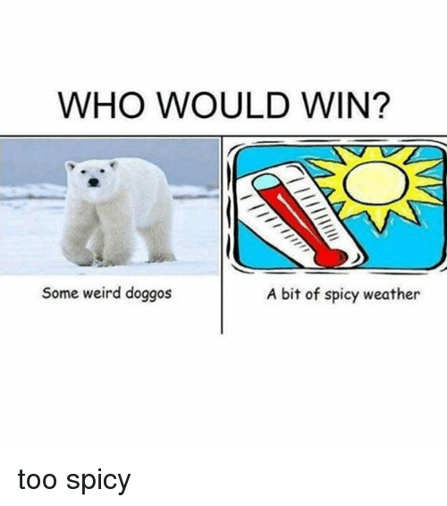 Too Spicy: WHO WOULD WIN?  Some weird doggos  A bit of spicy weather too spicy