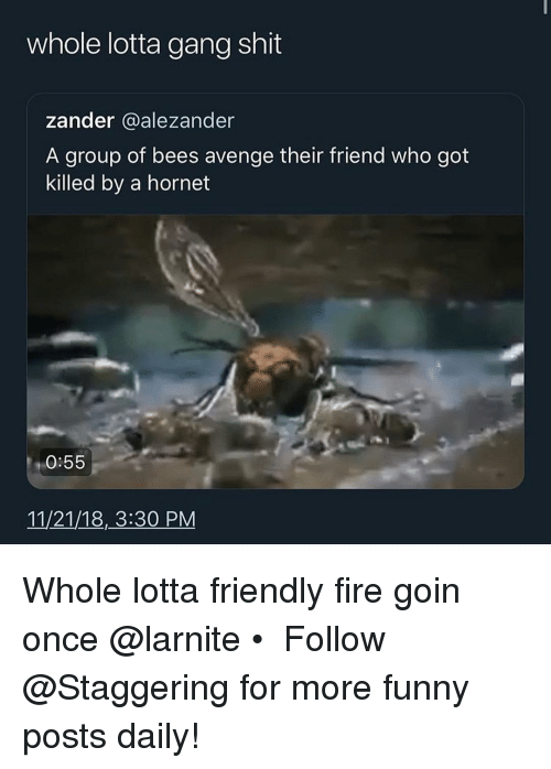 Fire, Funny, and Shit: whole lotta gang shit  zander alezander  A group of bees avenge their friend who got  killed by a hornet  0:55  11/21/18,3:30 PM Whole lotta friendly fire goin once @larnite • ➫➫➫ Follow @Staggering for more funny posts daily!