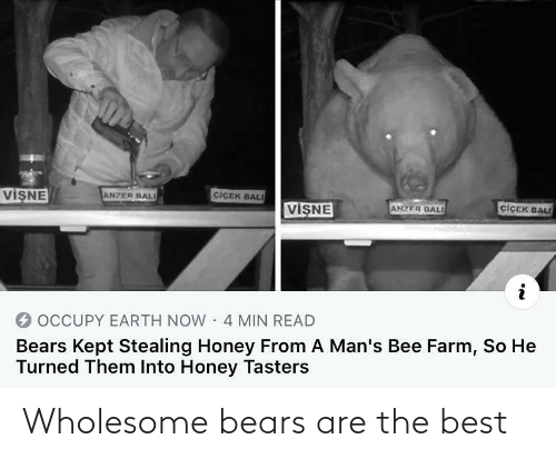 the best: Wholesome bears are the best