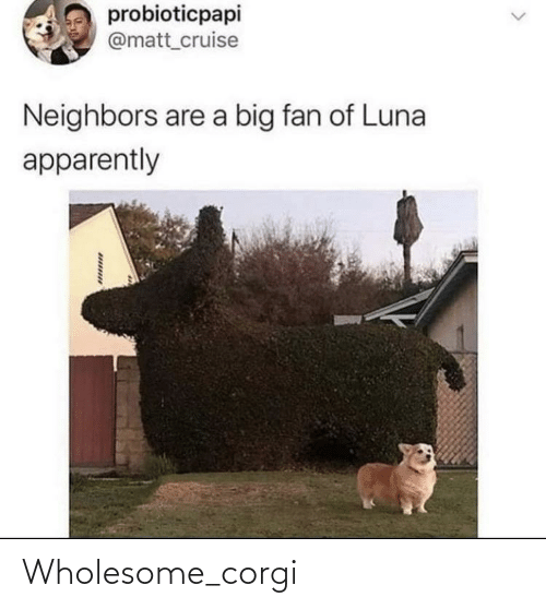 Wholesome: Wholesome_corgi