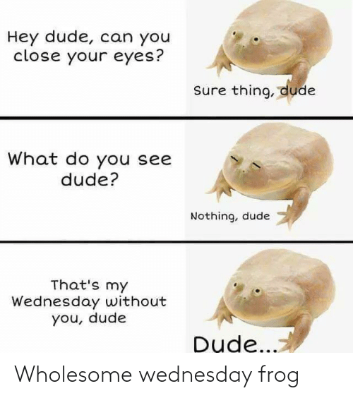 Wednesday: Wholesome wednesday frog