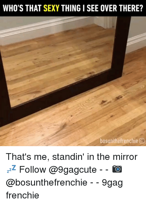 9gag, Memes, and Sexy: WHO'S THAT SEXY THING I SEE OVER THERE?  bosunthefrenchie O That's me, standin' in the mirror 💤 Follow @9gagcute - - 📷@bosunthefrenchie - - 9gag frenchie