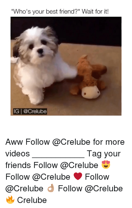 "Awwing: ""Who's your best friend?"" Wait for it!  IG 