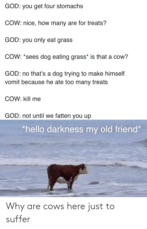 suffer: Why are cows here just to suffer
