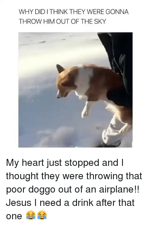 Funny, Jesus, and Airplane: WHY DIDITHINK THEY WERE GONNA  THROW HIM OUT OF THE SKY My heart just stopped and I thought they were throwing that poor doggo out of an airplane!! Jesus I need a drink after that one 😂😂