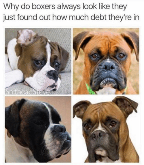 Memes, 🤖, and How: Why do boxers always look like they  just found out how much debt they're in