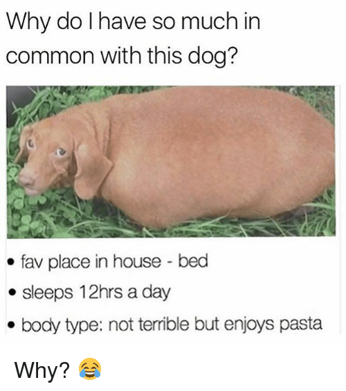 Memes, Common, and House: Why do I have so much in  common with this dog?  fav place in house-bed  . sleeps 12hrs a day  . body type: not terrible but enjoys pasta Why? 😂