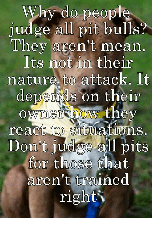 Why Do People Judge All Pit Bulls? They Aren't Mean Its Not in Their