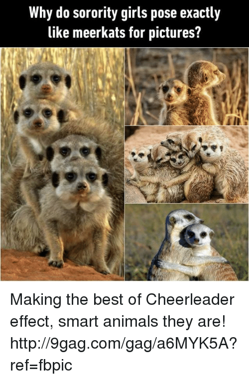 9gag, Dank, and Cheerleader: Why do sorority girls pose exactly  like meerkats for pictures? Making the best of Cheerleader effect, smart animals they are!  http://9gag.com/gag/a6MYK5A?ref=fbpic