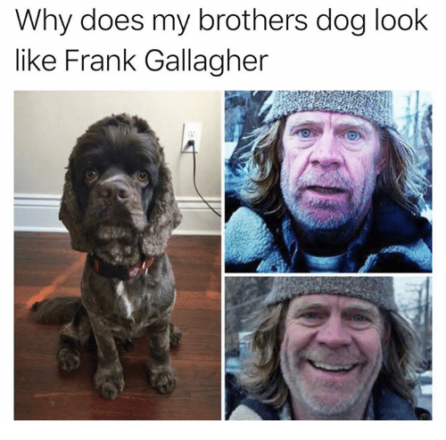 Dank, 🤖, and Dog: Why does my brothers dog look  like Frank Gallagher