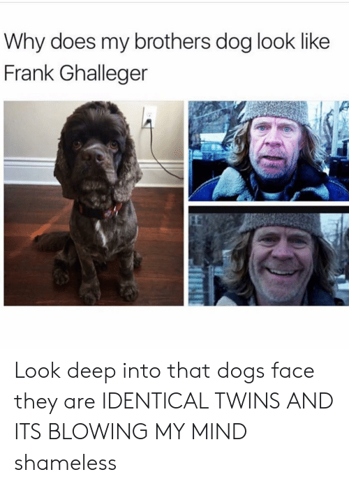 Dogs, Funny, and Shameless: Why does my brothers dog look like  Frank Ghalleger Look deep into that dogs face they are IDENTICAL TWINS AND ITS BLOWING MY MIND shameless