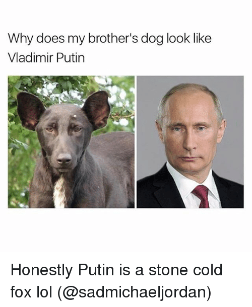 Funny, Lol, and Vladimir Putin: Why does my brother's dog look like  Vladimir Putin Honestly Putin is a stone cold fox lol (@sadmichaeljordan)