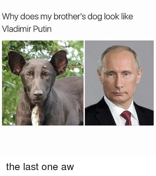Vladimir Putin, Putin, and Black Twitter: Why does my brother's dog look like  Vladimir Putin the last one aw