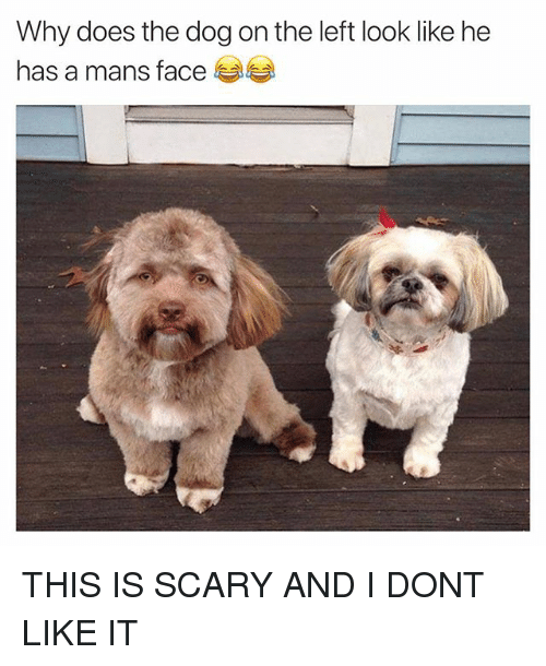 Funny, Dog, and Why: Why does the dog on the left look like he  has a mans face THIS IS SCARY AND I DONT LIKE IT