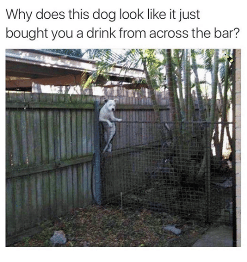 Dog, Bar, and Why: Why does this dog look like it just  bought you a drink from across the bar?