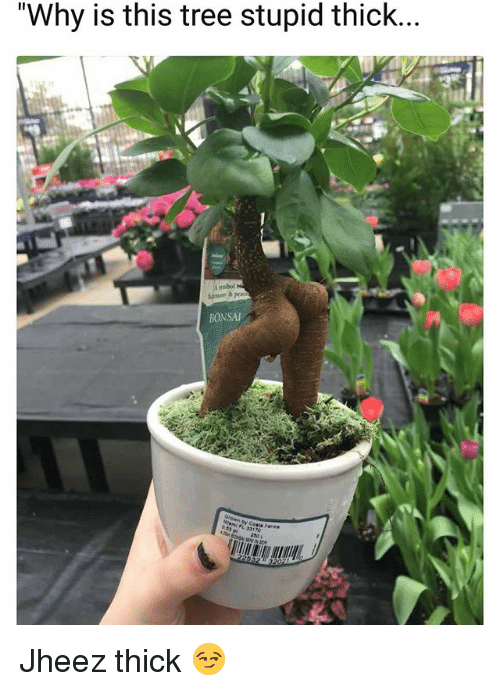 """Funny, Tree, and Bonsai: """"Why is this tree stupid thick...  BONSAI  2s0 Jheez thick 😏"""