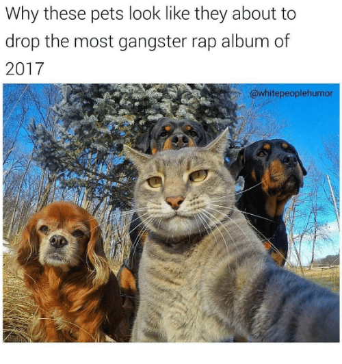 Gangster Rap: Why these pets look like they about to  drop the most gangster rap album of  2017  @white peoplehumor