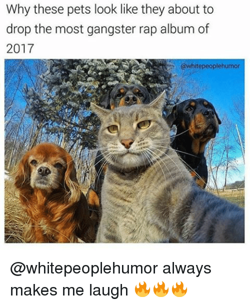Memes, Gangster Rap, and 🤖: Why these pets look like they about to  drop the most gangster rap album of  2017  hitepeoplehumor @whitepeoplehumor always makes me laugh 🔥🔥🔥