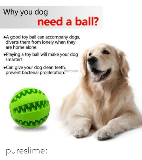 Being Alone, Dogs, and Home Alone: Why you dog  need a ball?  .A good toy ball can accompany dogs,  diverts them rom lonely when they  are home alone.  Playing a toy ball will make your dog  smarter!  .Can give your dog clean teeth,  prevnt bacterial proliferation  tarpets pureslime: