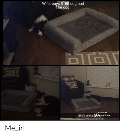 Wife, Irl, and Me IRL: Wife: buys $169 dog bed  The dog:  TVE  VE  MADE WITH  She's getting epboto Editor Me_irl