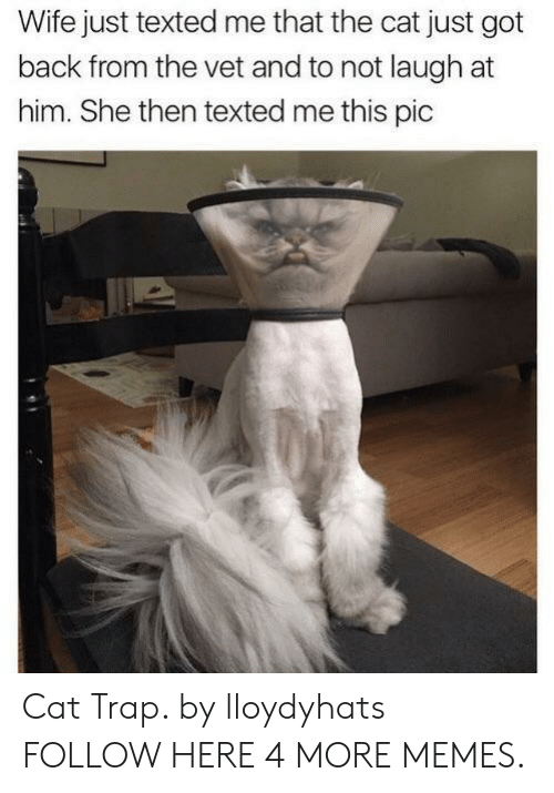 Dank, Memes, and Target: Wife just texted me that the cat just got  back from the vet and to not laugh at  him. She then texted me this pic Cat Trap. by lloydyhats FOLLOW HERE 4 MORE MEMES.