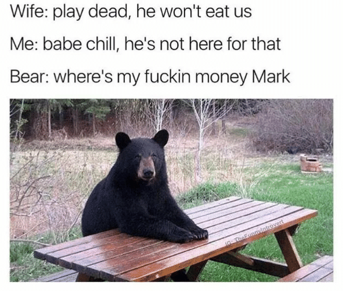 Money, Bear, and Wife: Wife: play dead, he won't eat us  Me: babe chillI, he's not here for that  Bear: where's my fuckin money Mark  IG TheFunnyintrovert