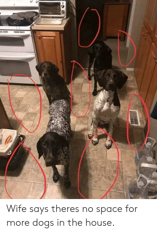 Dogs, House, and Space: Wife says theres no space for more dogs in the house.