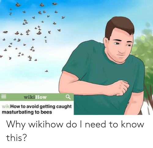 Reddit, How To, and Wiki: wiki How  wik How to avoid getting caught  masturbating to bees Why wikihow do I need to know this?