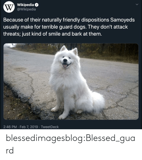 feb: Wikipedia  W @Wikipedia  Because of their naturally friendly dispositions Samoyeds  usually make for terrible guard dogs. They don't attack  threats; just kind of smile and bark at them.  2:46 PM · Feb 7, 2019 · TweetDeck blessedimagesblog:Blessed_guard
