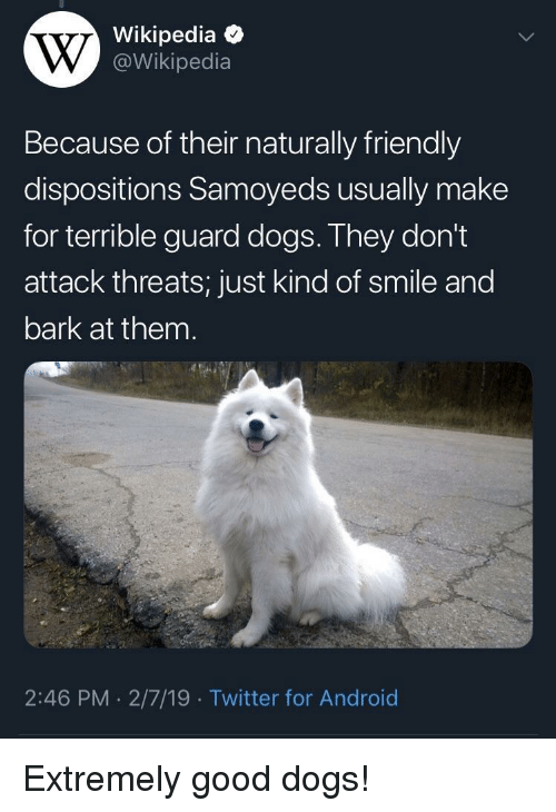 Android, Dogs, and Twitter: Wikipedia  @Wikipedia  Because of their naturally friendly  dispositions Samoyeds usually make  for terrible guard dogs. They don't  attack threats; just kind of smile and  bark at them  2:46 PM 2/7/19 Twitter for Android Extremely good dogs!