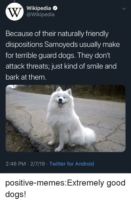 Android, Dogs, and Memes: Wikipedia  @Wikipedia  Because of their naturally friendly  dispositions Samoyeds usually make  for terrible guard dogs. They don't  attack threats; just kind of smile and  bark at them  2:46 PM 2/7/19 Twitter for Android positive-memes:Extremely good dogs!