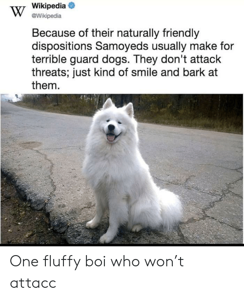 Dogs, Wikipedia, and Smile: Wikipedia  @Wikipedia  Because of their naturally friendly  dispositions Samoyeds usually make for  terrible guard dogs. They don't attack  threats; just kind of smile and bark at  them One fluffy boi who won't attacc