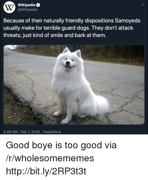 Dogs, Wikipedia, and Good: Wikipediae  @Wikipedia  Because of their naturally friendly dispositions Samoyeds  usually make for terrible guard dogs. They don't attack  threats; just kind of smile and bark at them.  2:46 PM Feb 7, 2019 TweetDeck Good boye is too good via /r/wholesomememes http://bit.ly/2RP3t3t