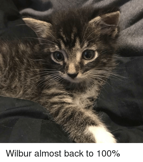 Anaconda, Back, and  Almost: Wilbur almost back to 100%