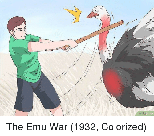 How, War, and Emu: wilki How The Emu War (1932, Colorized)