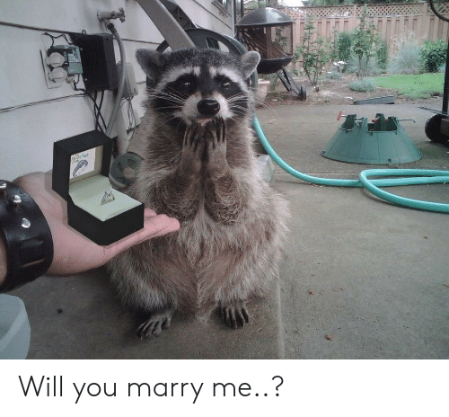 will you marry me: Will you marry me..?