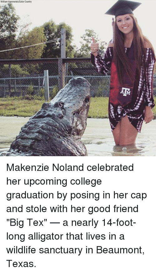 """College, Memes, and Alligator: William Hammonds/Gator Country Makenzie Noland celebrated her upcoming college graduation by posing in her cap and stole with her good friend """"Big Tex"""" — a nearly 14-foot-long alligator that lives in a wildlife sanctuary in Beaumont, Texas."""