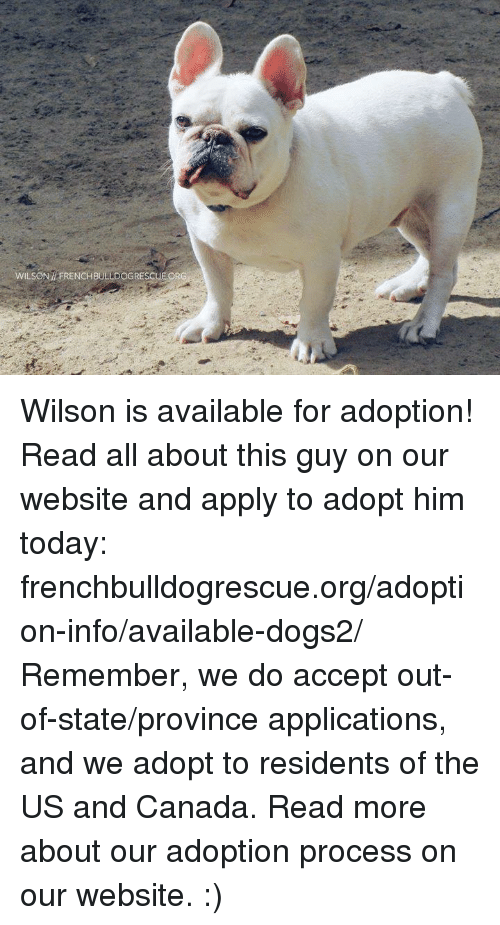 Memes, Canada, and 🤖: WILSON HFRENCHBULL DOGRESCUE OR Wilson is available for adoption! Read all about this guy on our website <location, likes, dislikes> and apply to adopt him today: frenchbulldogrescue.org/adoption-info/available-dogs2/  Remember, we do accept out-of-state/province applications, and we adopt to residents of the US and Canada. Read more about our adoption process on our website. :)