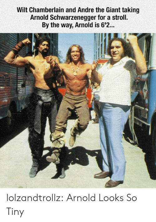 schwarzenegger: Wilt Chamberlain and Andre the Giant taking  Arnold Schwarzenegger for a stroll.  By the way, Arnold is 6'2... lolzandtrollz:  Arnold Looks So Tiny
