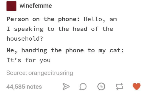Head, Hello, and Phone: Winefemme  Person on the phone: Hello, am  I speaking to the head of the  household?  Me, handing the phone to my cat:  It's for you  Source:orangecitrusring  44,585 notes
