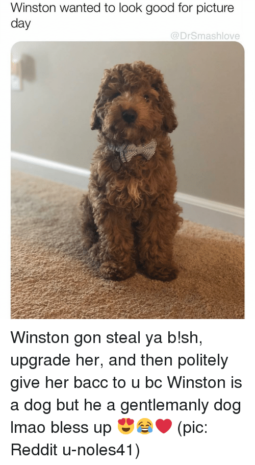 Bless Up, Lmao, and Memes: Winston wanted to look good for picture  day  @DrSmashlove Winston gon steal ya b!sh, upgrade her, and then politely give her bacc to u bc Winston is a dog but he a gentlemanly dog lmao bless up 😍😂❤️ (pic: Reddit u-noles41)