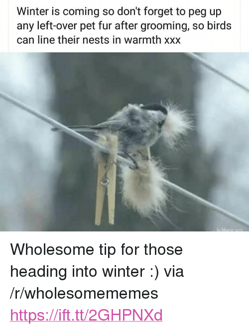 """Winter, Xxx, and Birds: Winter is coming so don't forget to pea up  any left-over pet fur after grooming, so birds  can line their nests in warmth xxx <p>Wholesome tip for those heading into winter :) via /r/wholesomememes <a href=""""https://ift.tt/2GHPNXd"""">https://ift.tt/2GHPNXd</a></p>"""