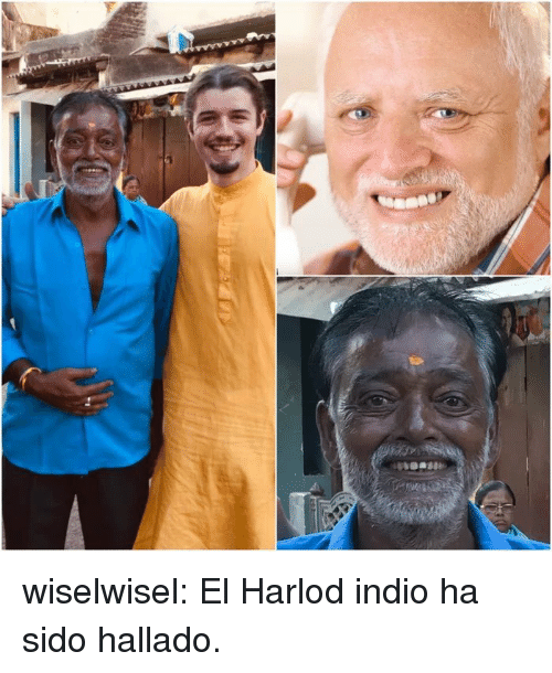 Gif, Tumblr, and Blog: wiselwisel: El Harlod indio ha sido hallado.