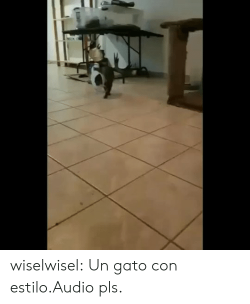 Tumblr, Blog, and Audio: wiselwisel:  Un gato con estilo.Audio pls.