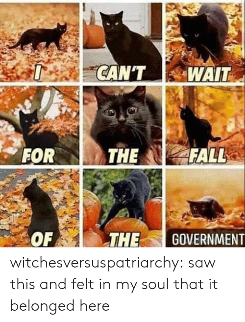Saw, Tumblr, and Blog: witchesversuspatriarchy:  saw this and felt in my soul that it belonged here