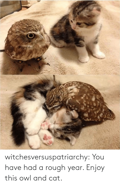 owl: witchesversuspatriarchy:  You have had a rough year. Enjoy this owl and cat.
