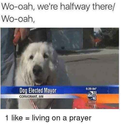 Memes, Prayer, and Living: Wo-oah, we're halfway there/  Wo-oah,  529 84  Dog Elected Mavor  CORMORANT, MN  40 1 like = living on a prayer
