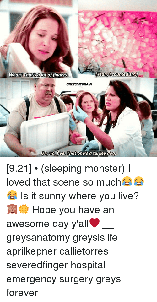 Memes, Monster, and Yeah: Woah! That salot of fingers  Yeah, l counted six.  GREYSMYBRAIN  on, ho ive. uhat one s a turkey dog [9.21] • (sleeping monster) I loved that scene so much😂😂😂 Is it sunny where you live?🙈🌞 Hope you have an awesome day y'all❤️ __ greysanatomy greysislife aprilkepner callietorres severedfinger hospital emergency surgery greys forever