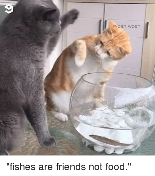 """Dank, Food, and Friends: Woah woah """"fishes are friends not food."""""""