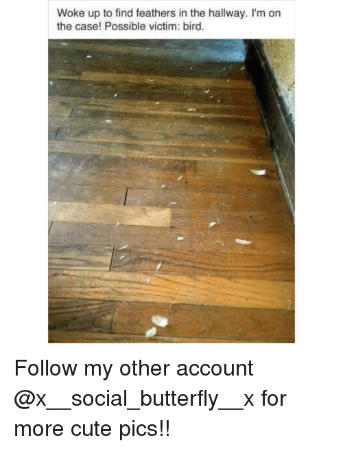 Cute, Memes, and Butterfly: Woke up to find feathers in the hallway. I'm on  the case! Possible victim: bird. Follow my other account @x__social_butterfly__x for more cute pics!!